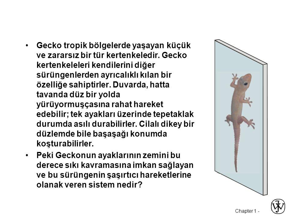 Gecko tropik bölgelerde yaşayan küçük ve zararsız bir tür kertenkeledir. Gecko kertenkeleleri kendilerini diğer sürüngenlerden ayrıcalıklı kılan bir özelliğe sahiptirler. Duvarda, hatta tavanda düz bir yolda yürüyormuşçasına rahat hareket edebilir; tek ayakları üzerinde tepetaklak durumda asılı durabilirler. Cilalı dikey bir düzlemde bile başaşağı konumda koşturabilirler.