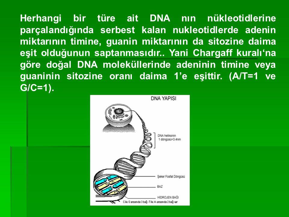 Herhangi bir türe ait DNA nın nükleotidlerine parçalandığında serbest kalan nukleotidlerde adenin miktarının timine, guanin miktarının da sitozine daima eşit olduğunun saptanmasıdır..