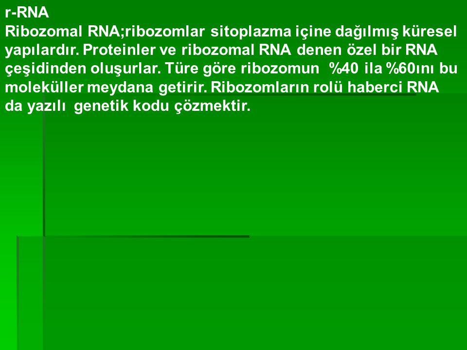 r-RNA