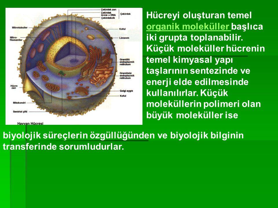 Hücreyi oluşturan temel organik moleküller başlıca iki grupta toplanabilir. Küçük moleküller hücrenin temel kimyasal yapı taşlarının sentezinde ve enerji elde edilmesinde kullanılırlar. Küçük moleküllerin polimeri olan büyük moleküller ise