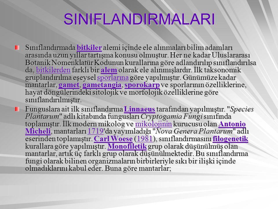 SINIFLANDIRMALARI