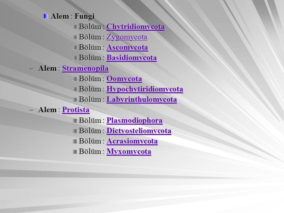 Alem : Fungi Bölüm : Chytridiomycota. Bölüm : Zygomycota. Bölüm : Ascomycota. Bölüm : Basidiomycota.