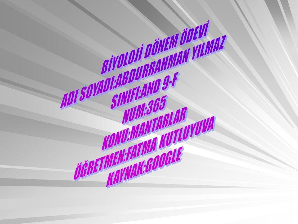 ADI SOYADI:ABDURRAHMAN YILMAZ SINIFI:AND 9-F NUM:365 KONU:MANTARLAR