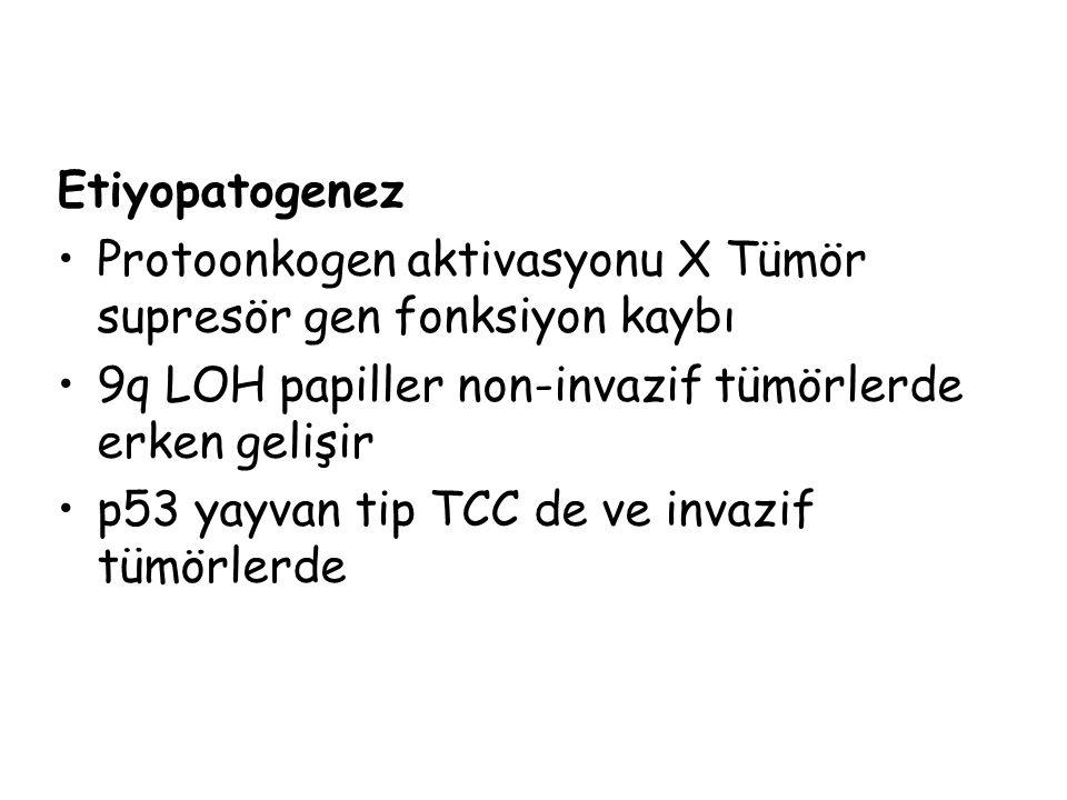 Etiyopatogenez Protoonkogen aktivasyonu X Tümör supresör gen fonksiyon kaybı. 9q LOH papiller non-invazif tümörlerde erken gelişir.