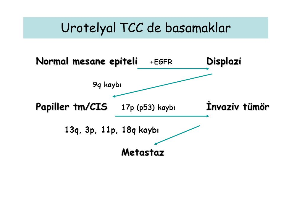 Urotelyal TCC de basamaklar