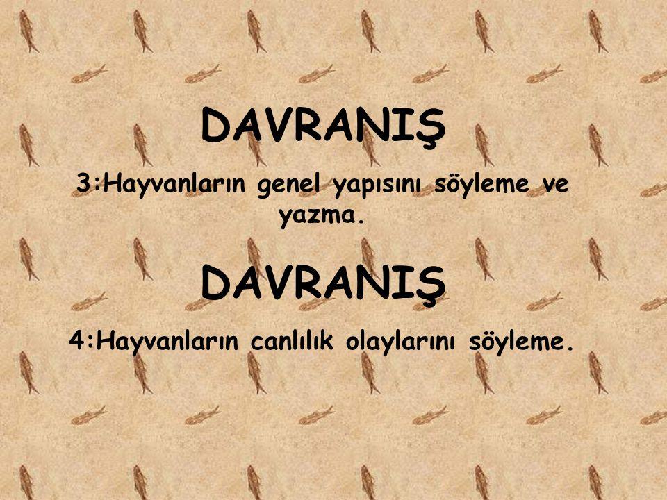 DAVRANIŞ 3:Hayvanların genel yapısını söyleme ve yazma.