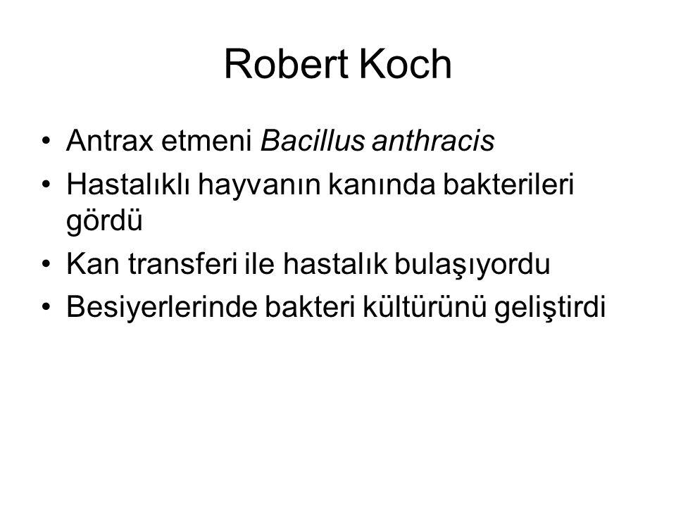 Robert Koch Antrax etmeni Bacillus anthracis