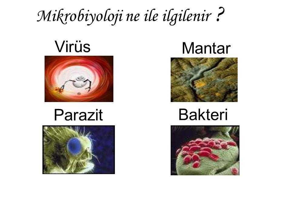 Mikrobiyoloji ne ile ilgilenir