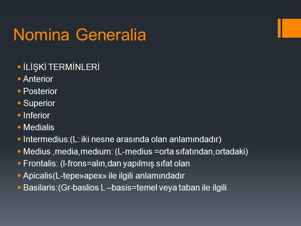 Nomina Generalia İLİŞKİ TERMİNLERİ Anterior Posterior Superior