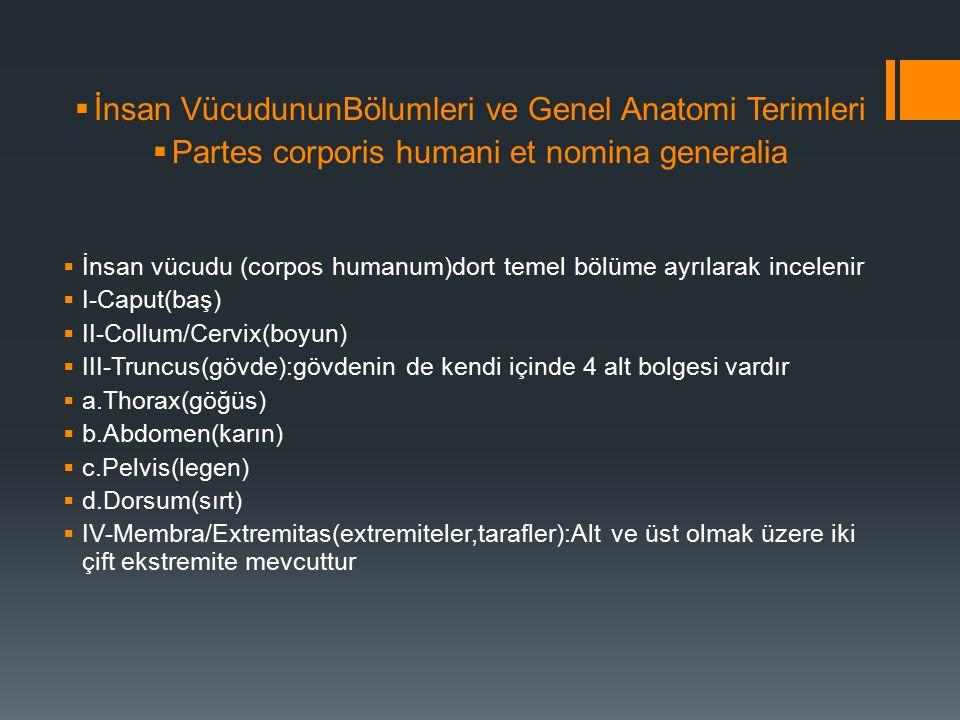 İnsan VücudununBölumleri ve Genel Anatomi Terimleri
