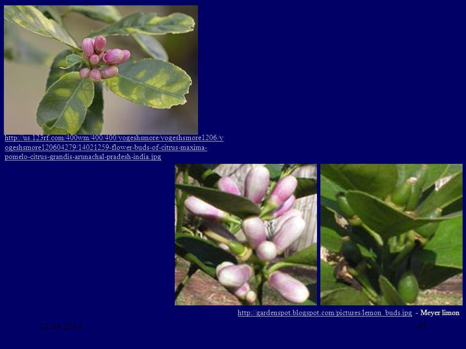 http://us.123rf.com/400wm/400/400/yogeshsmore/yogeshsmore1206/yogeshsmore120604279/14021259-flower-buds-of-citrus-maxima-pomelo-citrus-grandis-arunachal-pradesh-india.jpg