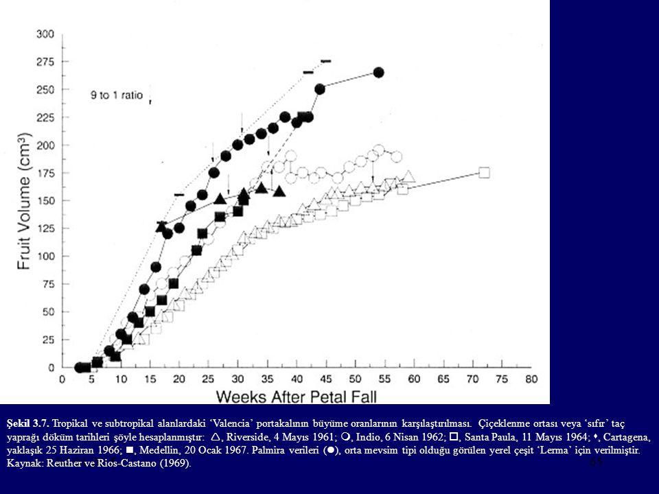 Şekil 3.7. Tropikal ve subtropikal alanlardaki 'Valencia' portakalının büyüme oranlarının karşılaştırılması. Çiçeklenme ortası veya 'sıfır' taç yaprağı döküm tarihleri şöyle hesaplanmıştır: , Riverside, 4 Mayıs 1961; , Indio, 6 Nisan 1962; , Santa Paula, 11 Mayıs 1964; , Cartagena, yaklaşık 25 Haziran 1966; , Medellin, 20 Ocak 1967. Palmira verileri (), orta mevsim tipi olduğu görülen yerel çeşit 'Lerma' için verilmiştir. Kaynak: Reuther ve Rios-Castano (1969).