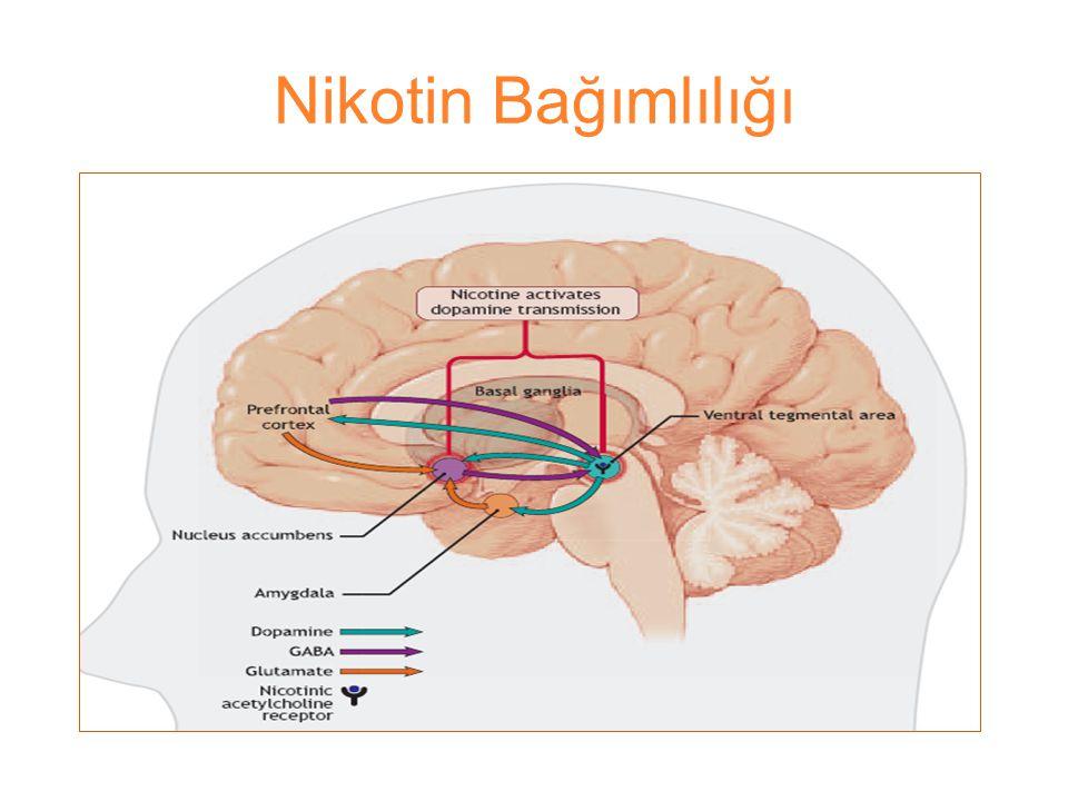 Nikotin Bağımlılığı Fizik bağımlılığın nedeni nikotin 3