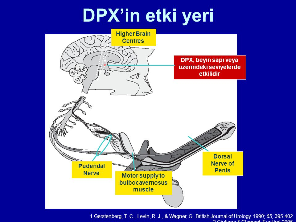 DPX'in etki yeri Higher Brain Centres