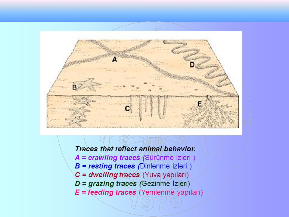 Traces that reflect animal behavior