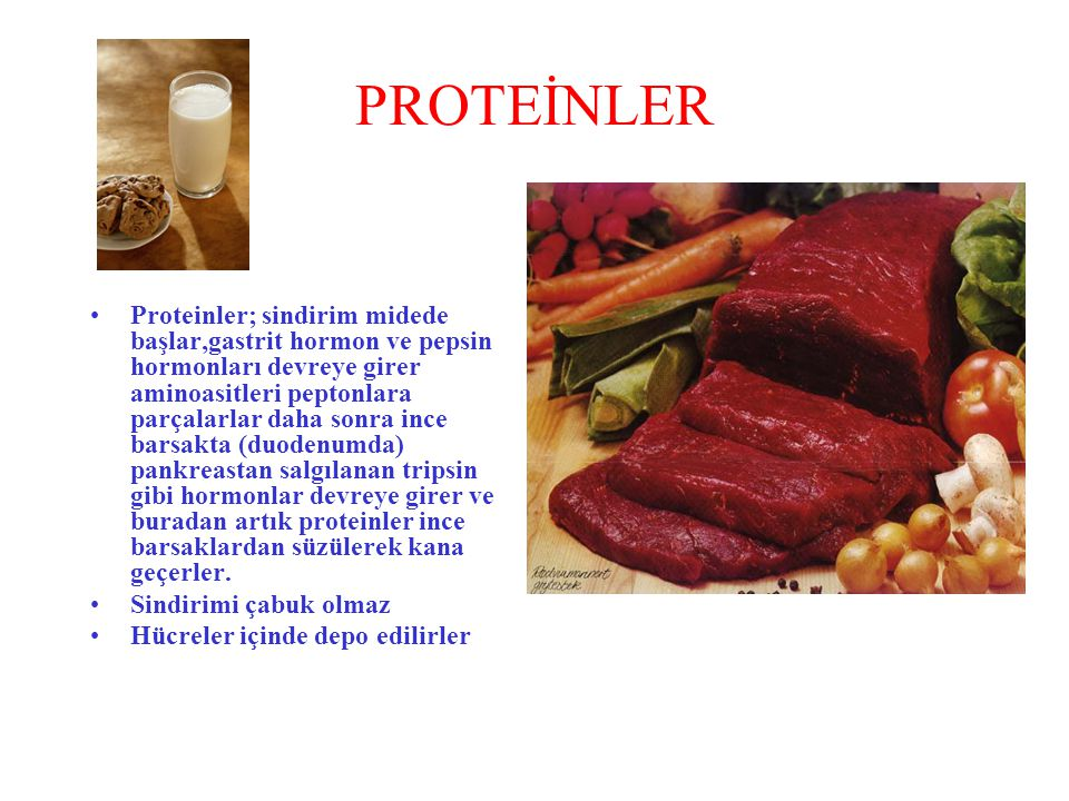 PROTEİNLER