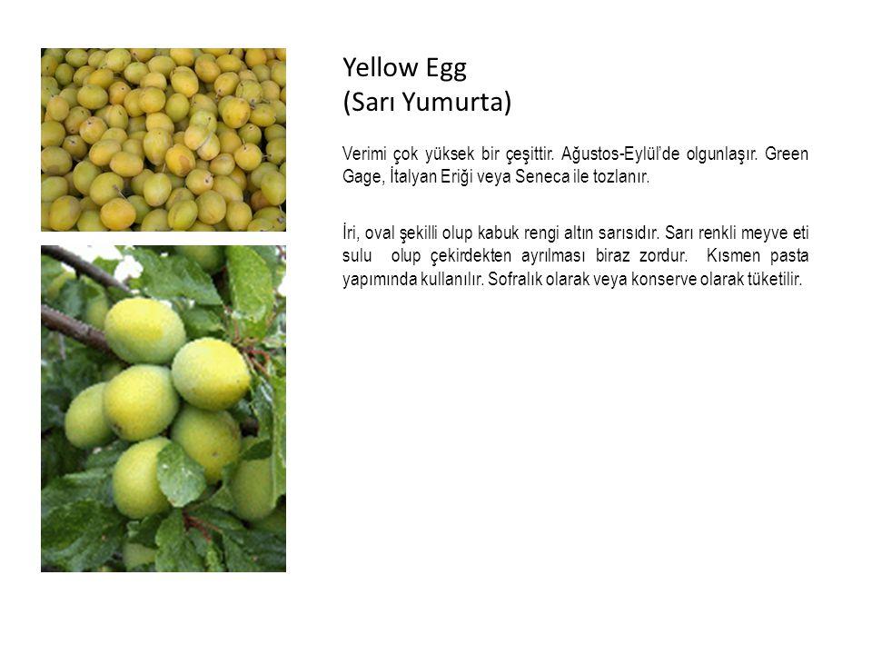 Yellow Egg (Sarı Yumurta)