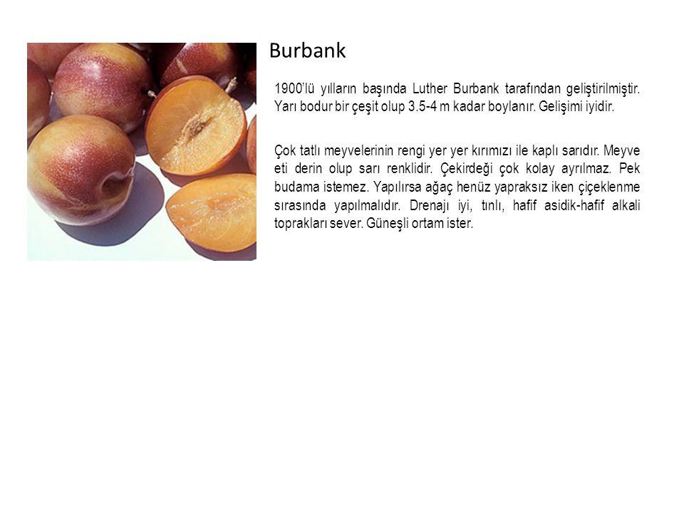 Burbank 1900'lü yılların başında Luther Burbank tarafından geliştirilmiştir. Yarı bodur bir çeşit olup 3.5-4 m kadar boylanır. Gelişimi iyidir.