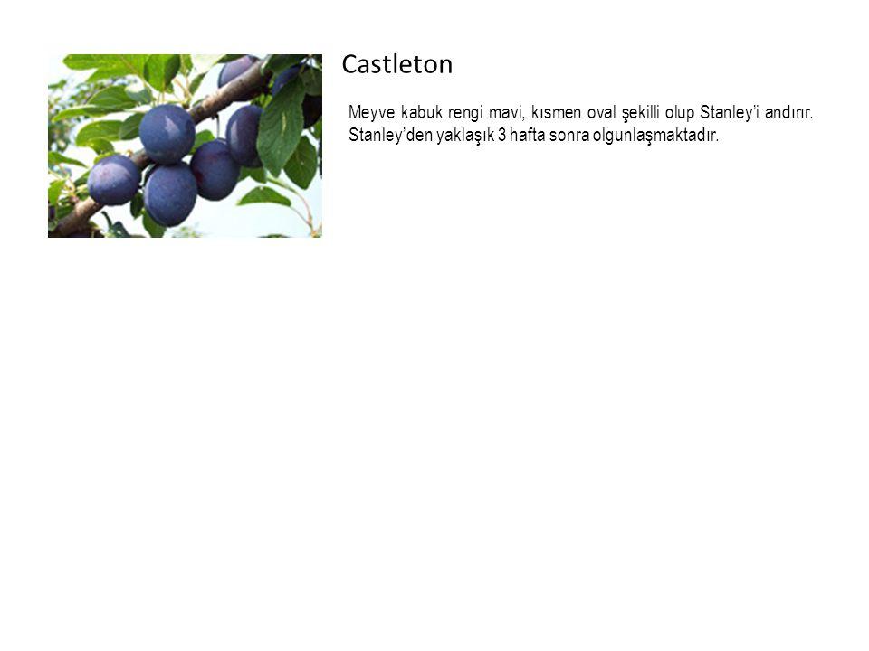 Castleton Meyve kabuk rengi mavi, kısmen oval şekilli olup Stanley'i andırır. Stanley'den yaklaşık 3 hafta sonra olgunlaşmaktadır.