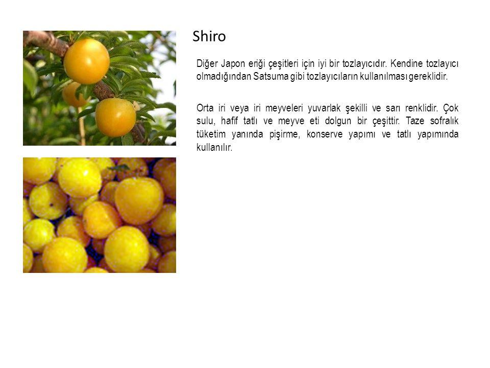 Shiro Diğer Japon eriği çeşitleri için iyi bir tozlayıcıdır. Kendine tozlayıcı olmadığından Satsuma gibi tozlayıcıların kullanılması gereklidir.