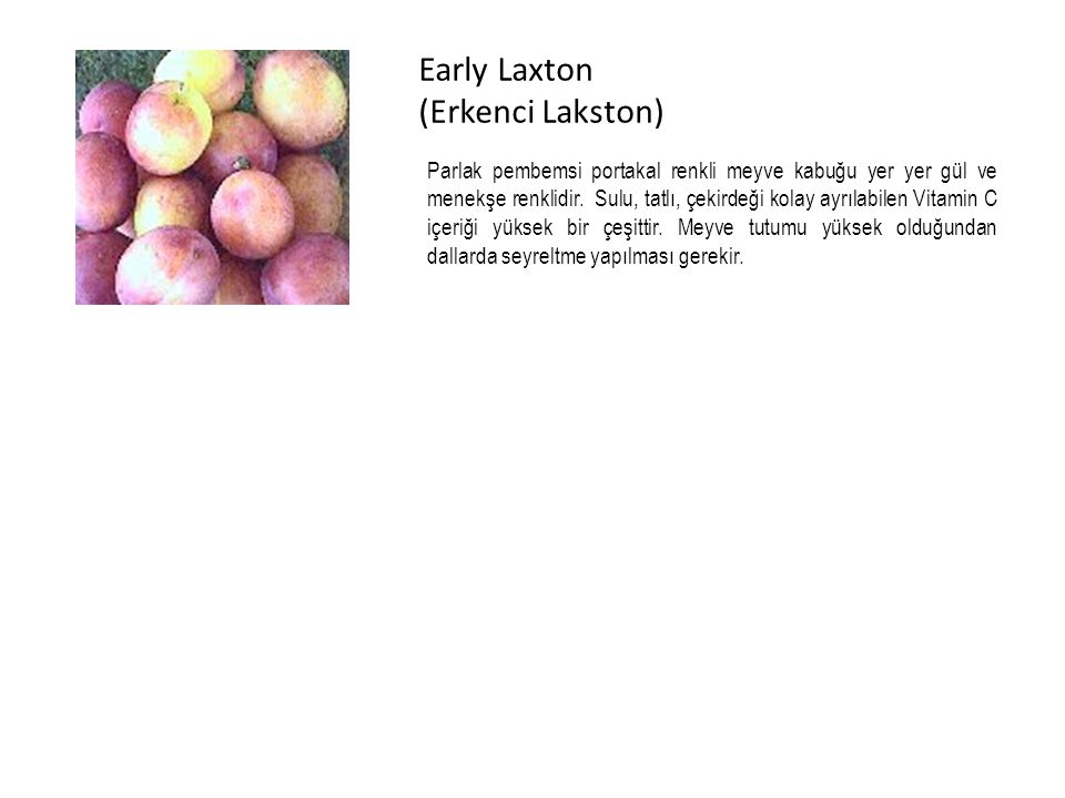 Early Laxton (Erkenci Lakston)