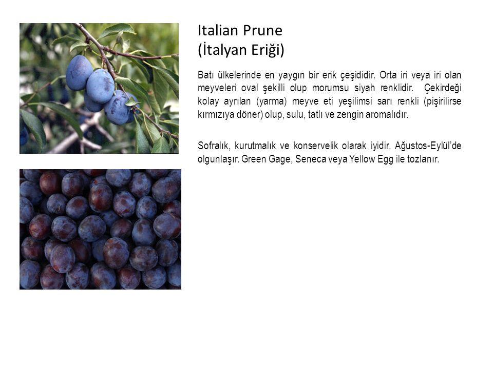 Italian Prune (İtalyan Eriği)