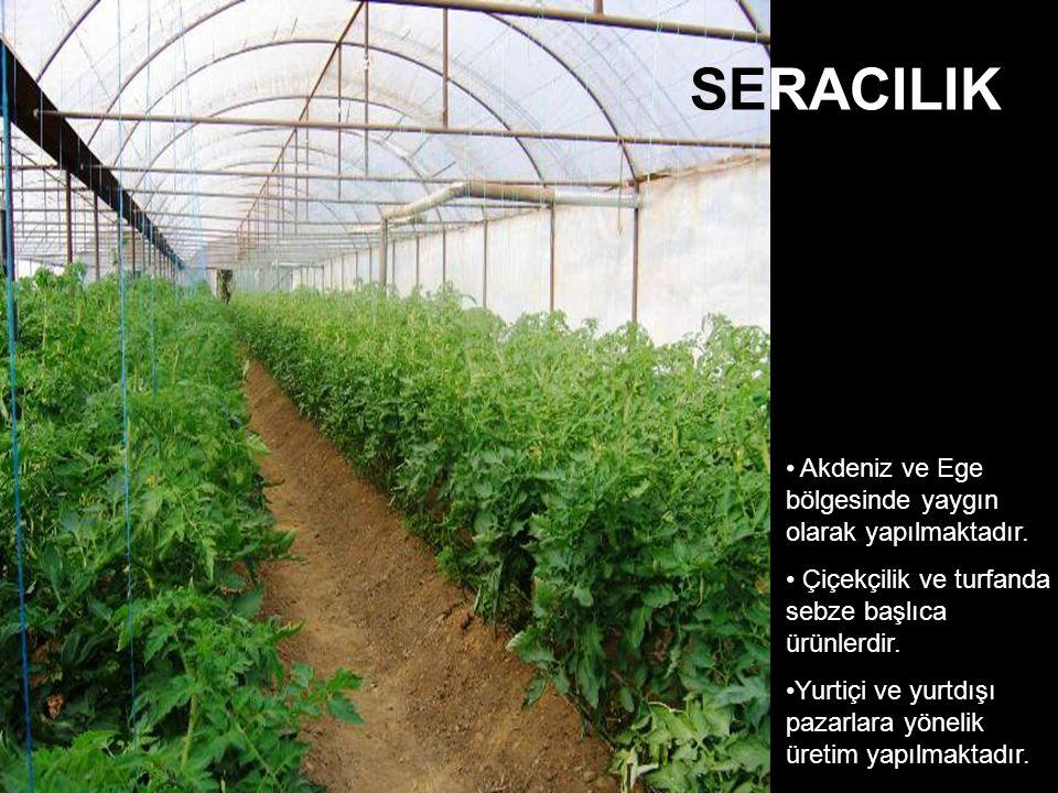 SERACILIK Akdeniz ve Ege bölgesinde yaygın olarak yapılmaktadır.