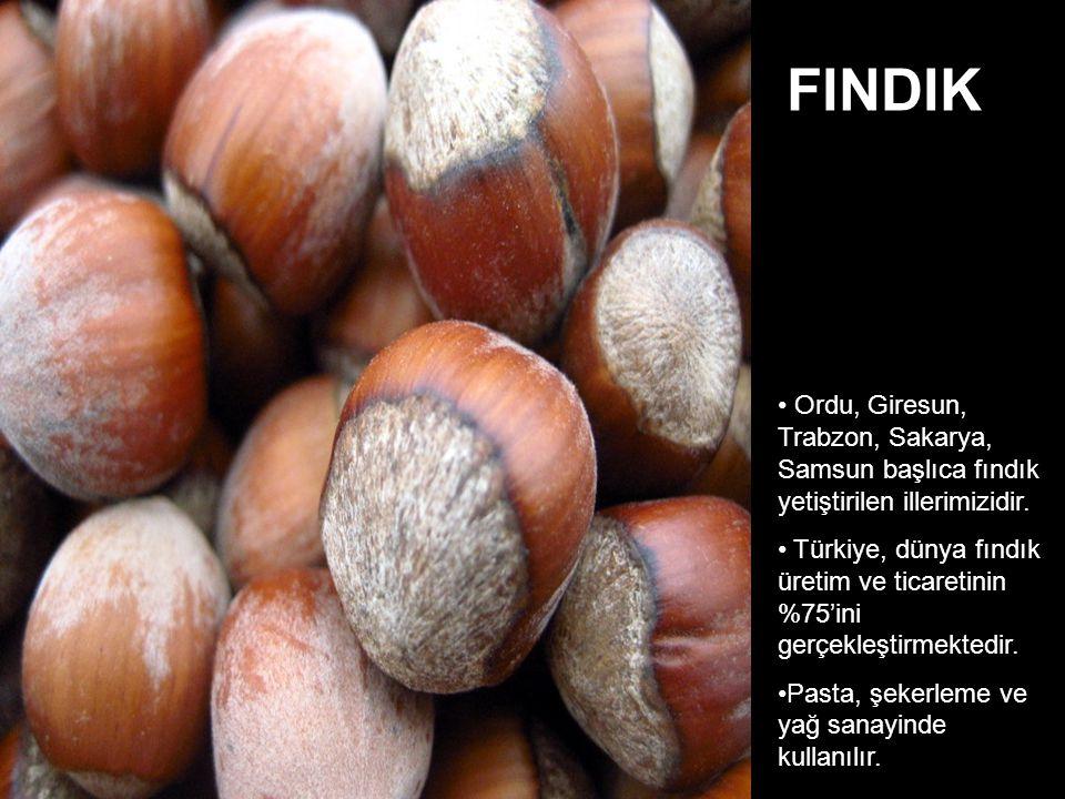 FINDIK Ordu, Giresun, Trabzon, Sakarya, Samsun başlıca fındık yetiştirilen illerimizidir.