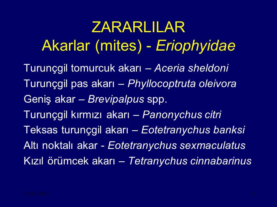 ZARARLILAR Akarlar (mites) - Eriophyidae