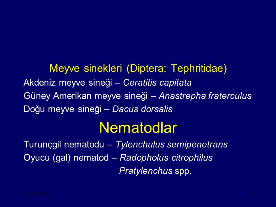 Meyve sinekleri (Diptera: Tephritidae)