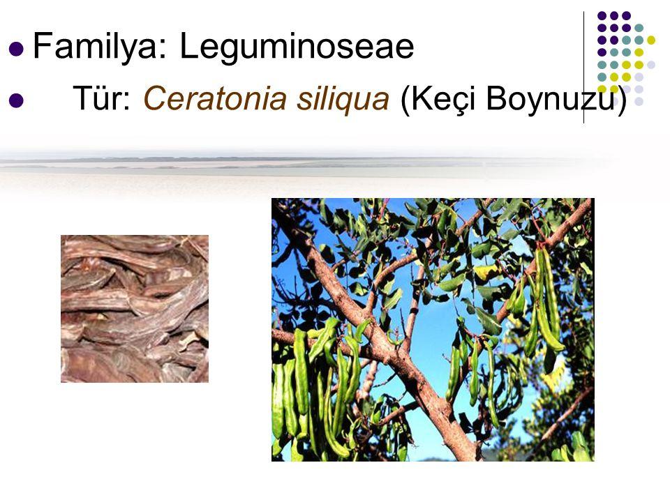 Familya: Leguminoseae