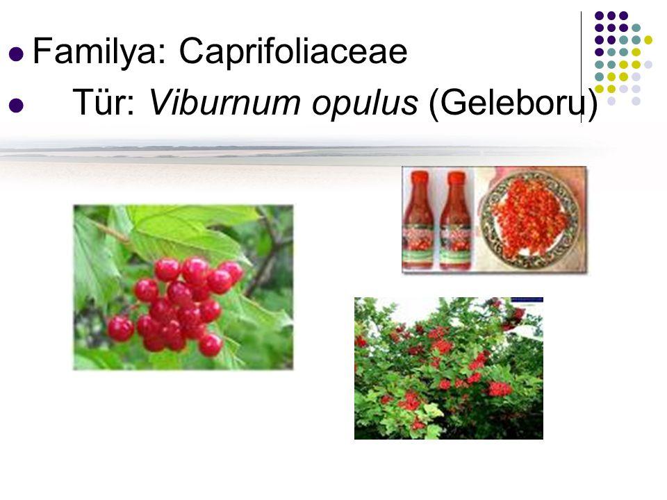 Familya: Caprifoliaceae
