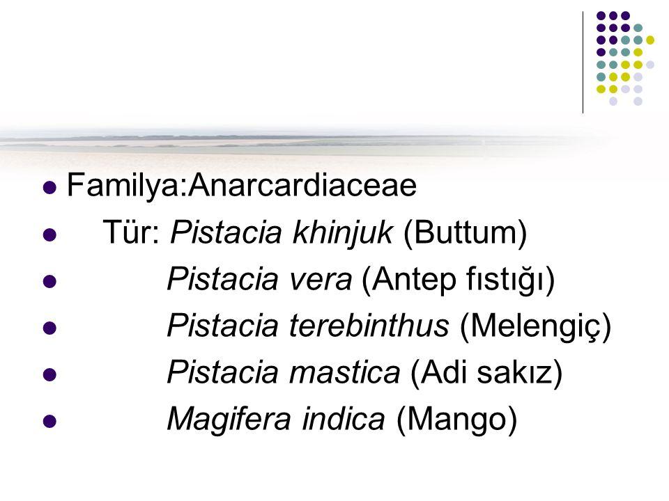 Familya:Anarcardiaceae