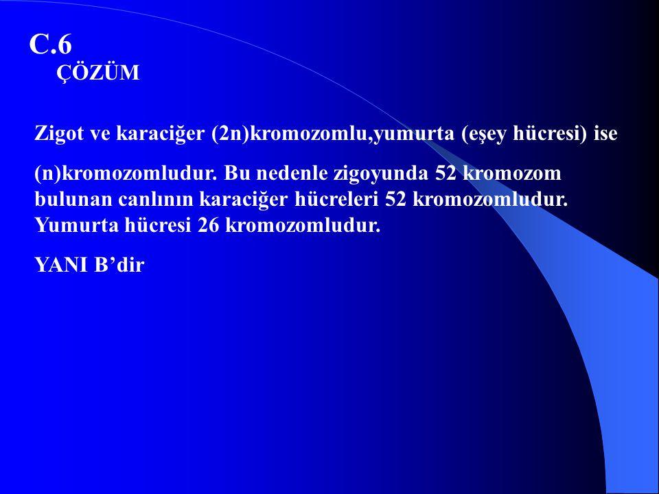 C.6 ÇÖZÜM Zigot ve karaciğer (2n)kromozomlu,yumurta (eşey hücresi) ise