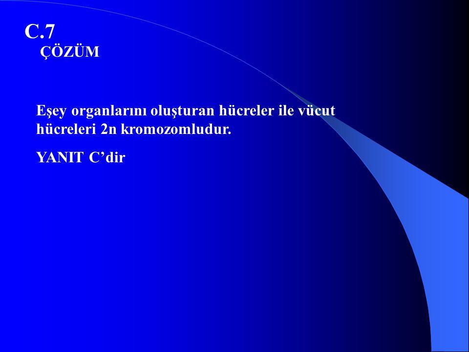 C.7 ÇÖZÜM Eşey organlarını oluşturan hücreler ile vücut hücreleri 2n kromozomludur. YANIT C'dir