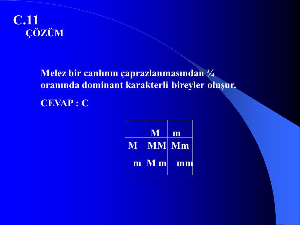C.11 ÇÖZÜM. Melez bir canlının çaprazlanmasından ¾ oranında dominant karakterli bireyler oluşur. CEVAP : C.