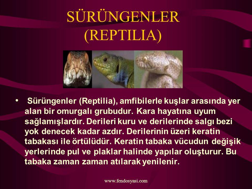 SÜRÜNGENLER (REPTILIA)