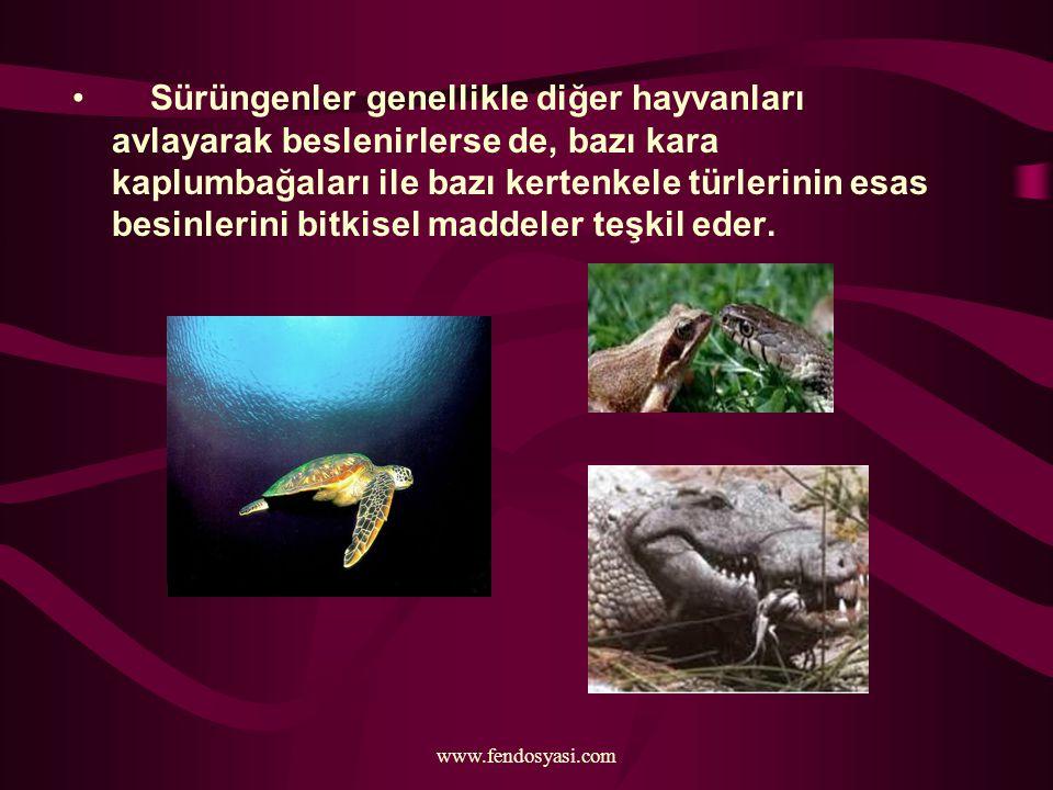 Sürüngenler genellikle diğer hayvanları avlayarak beslenirlerse de, bazı kara kaplumbağaları ile bazı kertenkele türlerinin esas besinlerini bitkisel maddeler teşkil eder.