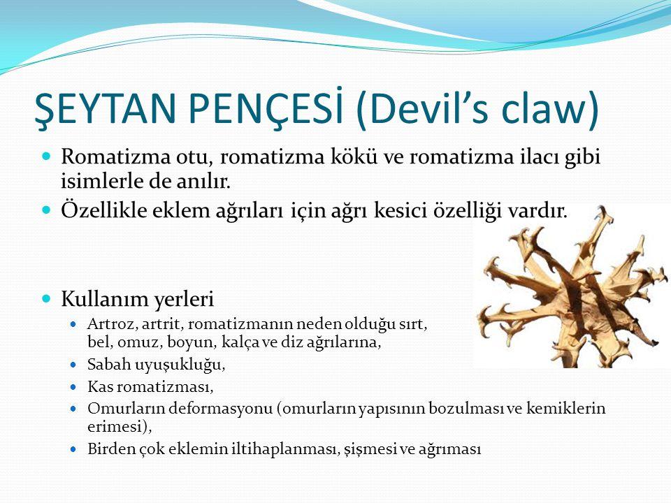 ŞEYTAN PENÇESİ (Devil's claw)