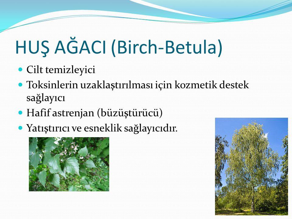 HUŞ AĞACI (Birch-Betula)
