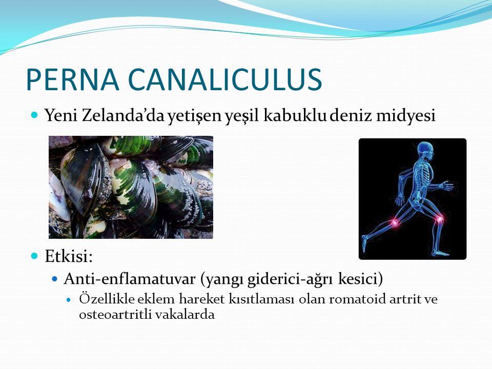 PERNA CANALICULUS Yeni Zelanda'da yetişen yeşil kabuklu deniz midyesi