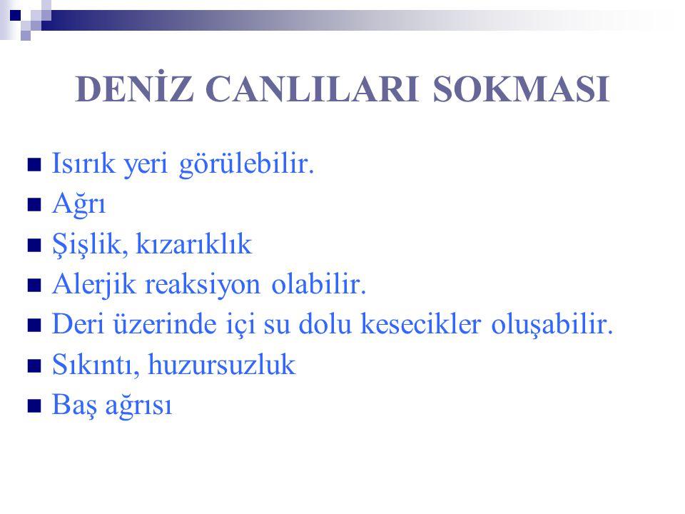 DENİZ CANLILARI SOKMASI