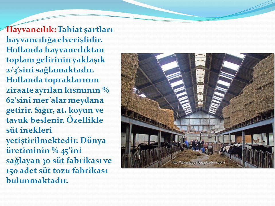 Hayvancılık: Tabiat şartları hayvancılığa elverişlidir