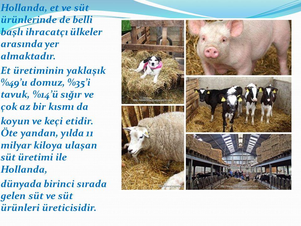 Hollanda, et ve süt ürünlerinde de belli başlı ihracatçı ülkeler arasında yer almaktadır.