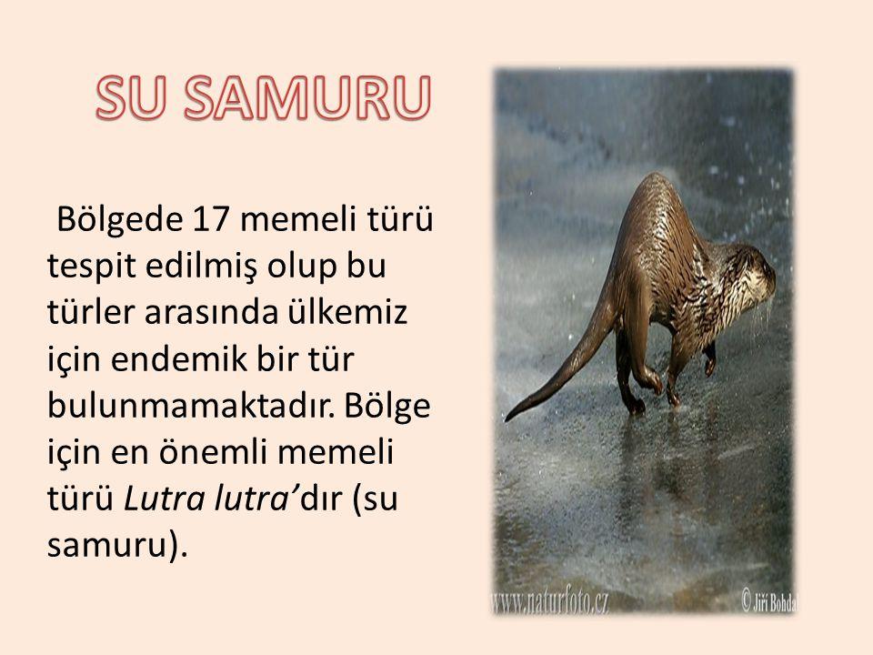 SU SAMURU