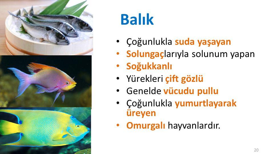 Balık Çoğunlukla suda yaşayan Solungaçlarıyla solunum yapan Soğukkanlı
