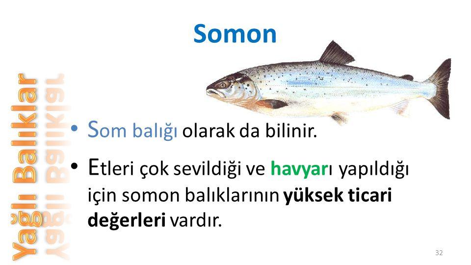 Yağlı Balıklar Somon Som balığı olarak da bilinir.