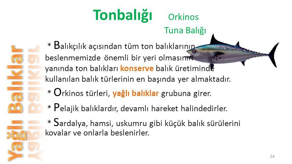 Tonbalığı Orkinos Tuna Balığı