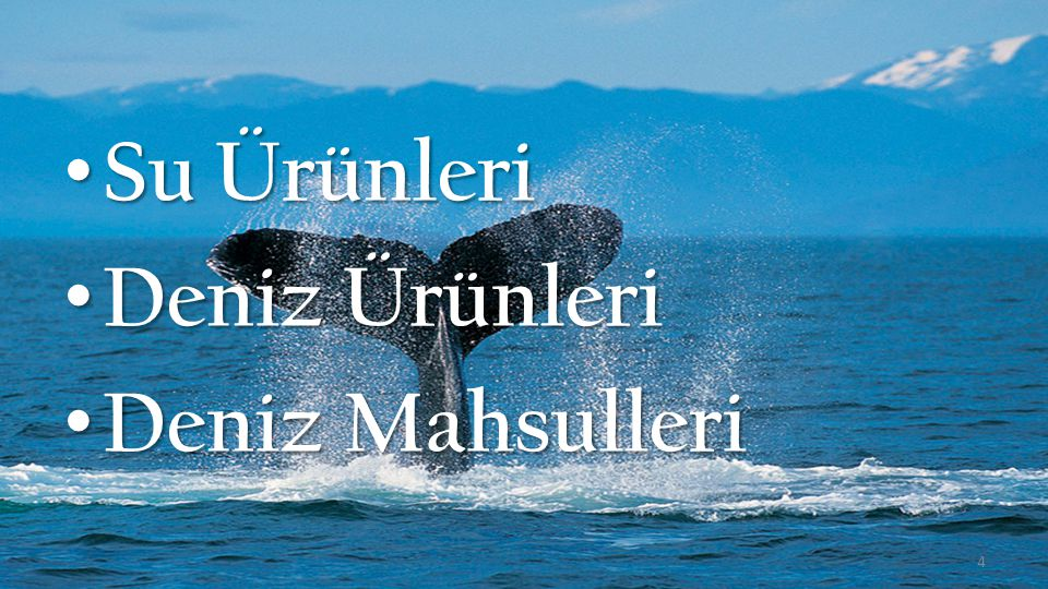 Su Ürünleri Deniz Ürünleri Deniz Mahsulleri