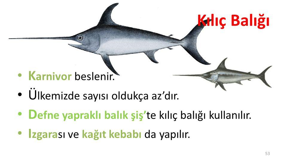 Kılıç Balığı Ülkemizde sayısı oldukça az'dır.